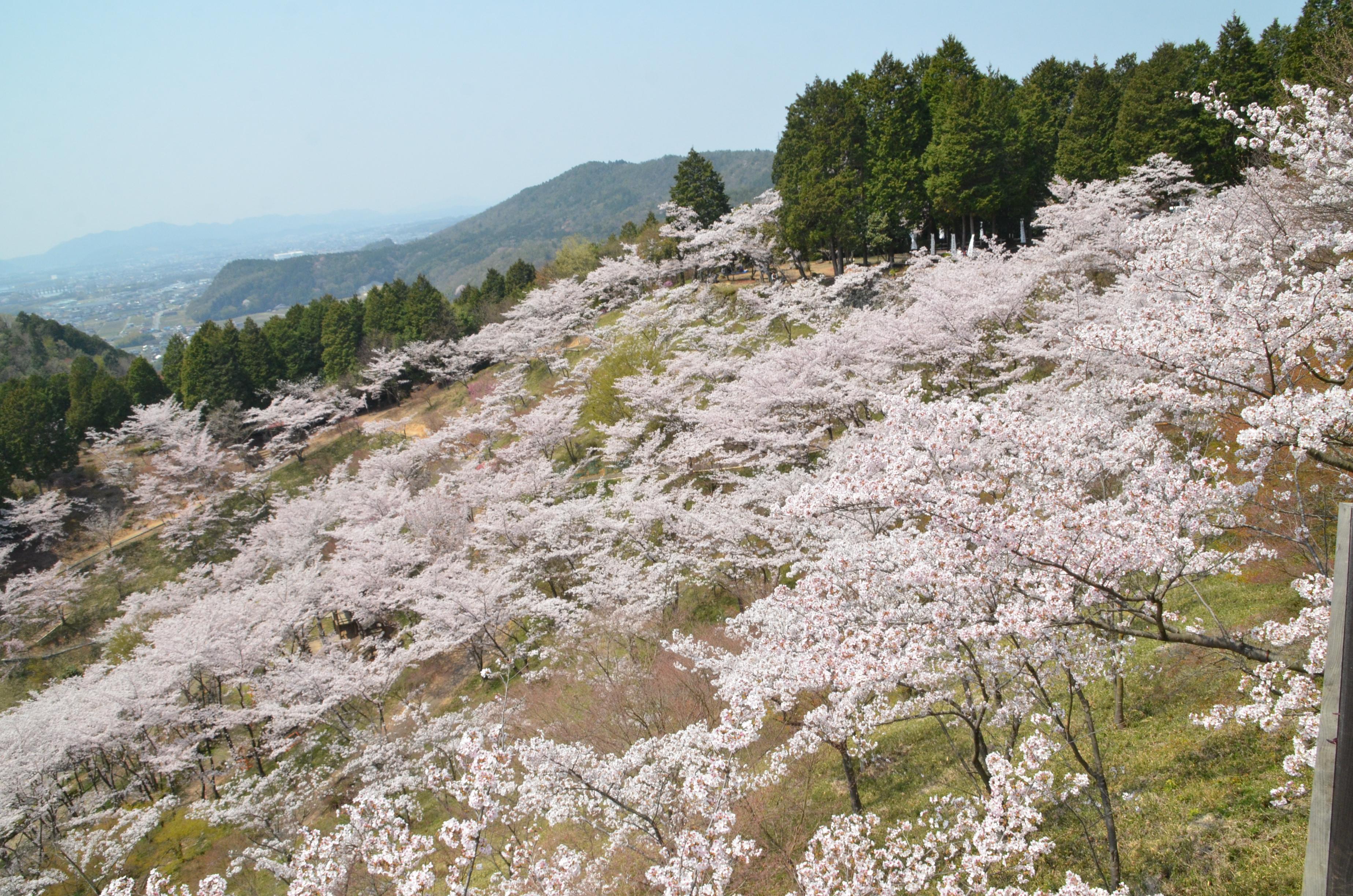 蘭丸ふる里の森