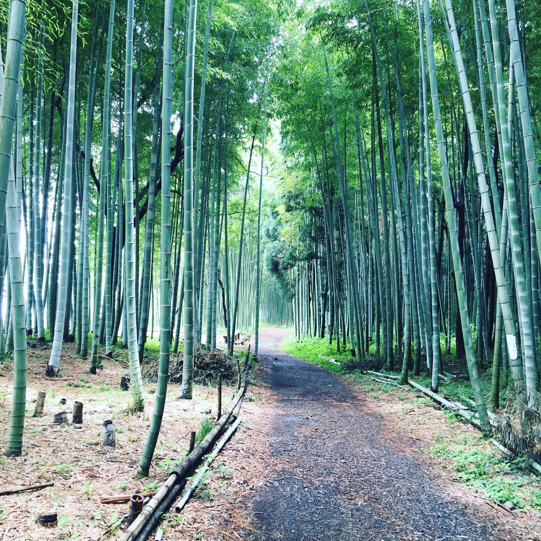 かぐや姫の散歩道(木曽川渡し場遊歩道)